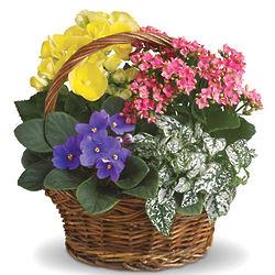 Spring Has Sprung Planter Basket