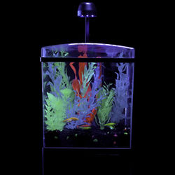 GloFish 1.5 Gallon Aquarium Kit
