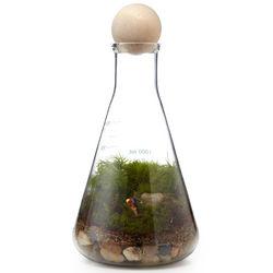 We Have Chemistry Terrarium