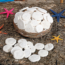 Basket of Sand Dollars