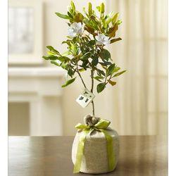 Nurturing Magnolia Tree
