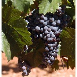 Merlot Monthly Wine Club