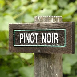 Pinot Noir Monthly Wine Club