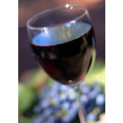 Zinfandel Monthly Wine Club