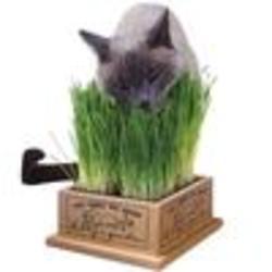 Kitty's Garden Edible Grass Planter