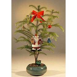 Norfolk Island Pine Bonsai Tree with Decorations