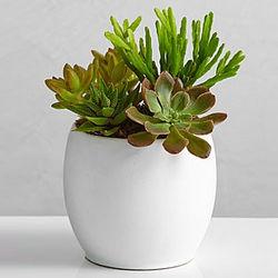 Succulent Garden in Ceramic Planter
