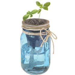 Hydroponic Herb Garden Jar
