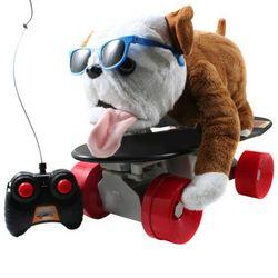Buddy the Skateboarding Dog