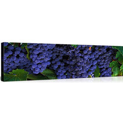 Grapes on the Vine in Napa, California Great Big Canvas