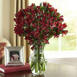 Fresh-Cut Burgundy Alstomeria Bouquet
