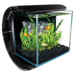 Silhouette Glass 3 Gallon LED Aquarium Kit