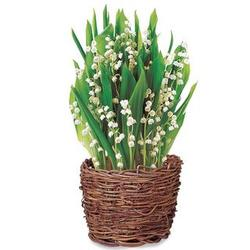 Lilies of the Valley Bulbs in a Basket