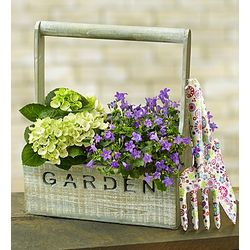 Gardening Delight Rumpet Campanula and White Hydrangeas