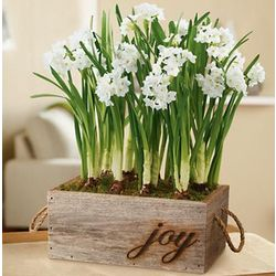 Paperwhites in Reclaimed Wooden Planter