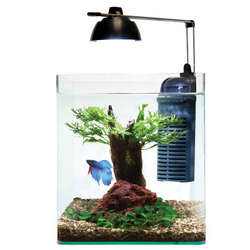 LED Flow Aquastyle Aquarium