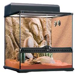 Desert Scene Reptile Glass Terrarium Kit
