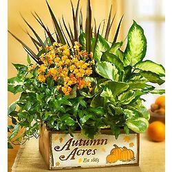 Autumn Acres Dish Garden