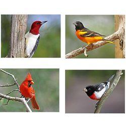 8 Popular Domestic Bird Photo Note Cards