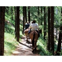 Armstrong Redwoods Trail Ride for Two