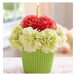 Cupcake in Bloom with Green and Orange Carnations