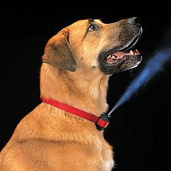 Citronella Bark Dog Collar
