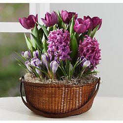 Lovely Lavender Bulb Garden