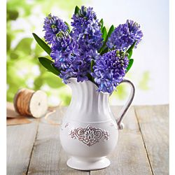 Large Fresh Market Blue Hyacinth Bouquet in Pitcher