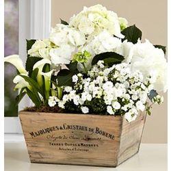 White Flowering Market Garden Bouquet