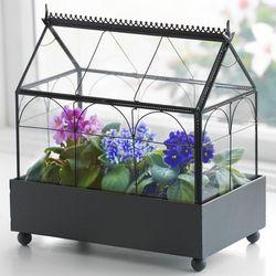 Victorian Violets Terrarium