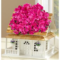 Birdhouse of Blooms Deluxe