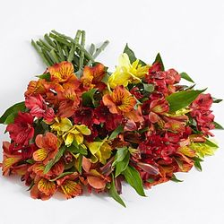 100 Blooms of Autumn Peruvian Lilies