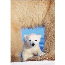 National Geographic Polar Bear Christmas Card