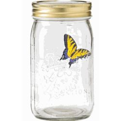 Yellow Swallowtail Butterfly in a Jar