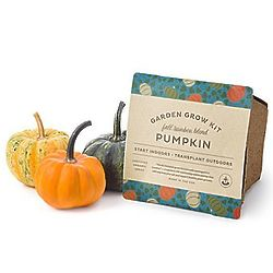 Pumpkin Grow Kit