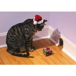Humorous Kitty Christmas Card