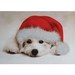 American Humane Association Glitter Puppy Christmas Card