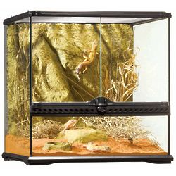 Reptile or Amphibian Glass Terrarium