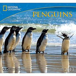 2013 National Geographic Penguins Wall Calendar