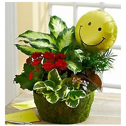 Send a Smile Blooming Dish Garden