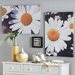 Daisy Canvas Prints