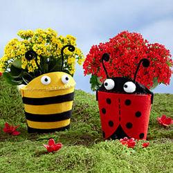 Bee Mine Love Bug Kalanchoe Duo
