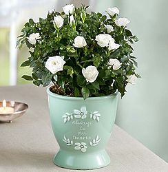 Heartfelt Memory Rose in 'Always in Our Hearts' Planter
