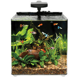 Evolve 8 Nano All-Inclusive Desktop Aquarium with LED