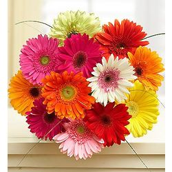 Happy Gerbera Daisies Bouquet