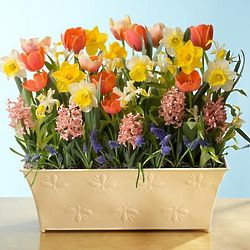 Glorious Spring Bulb Garden in Bee Embossed Planter