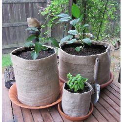 10 Gallon Burlap Plant Girdle