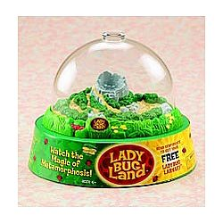 Lady Bug Land