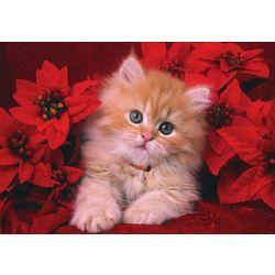 American Humane Association Kitten Christmas Card