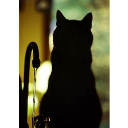 Cat in Waiting Vigil Photograph